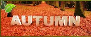 Autumn Car Shipping Quotes
